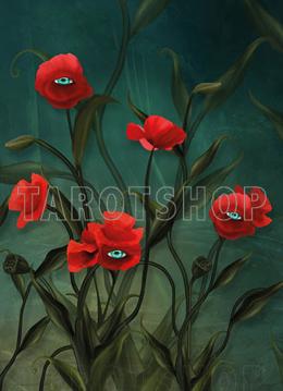 Bild på Magic Allseeing Poppies